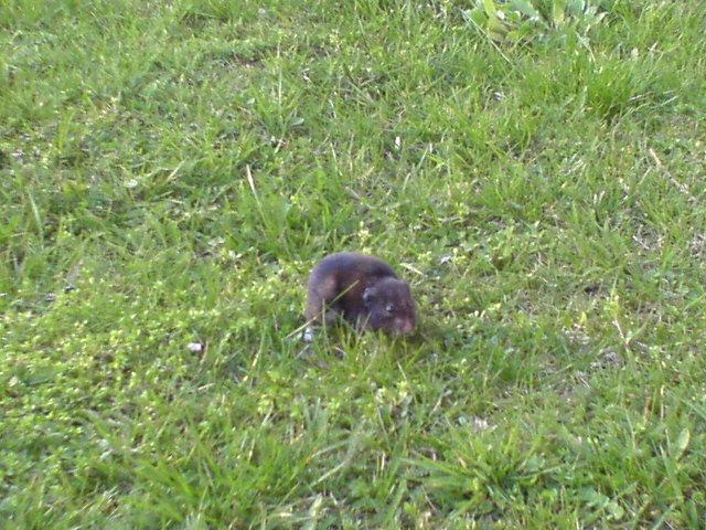 v trávě.JPG